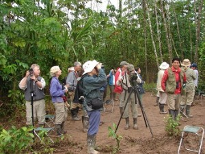 Tambopata Macaw Clay Lick 2 full days